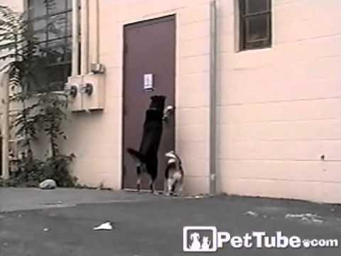 Three-Legged Dog Comes to the Rescue