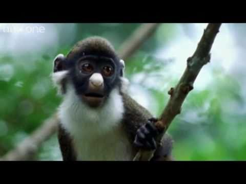 [VIDEO] Animal Crackers: The Best of BBC One's Walk On The Wild Side