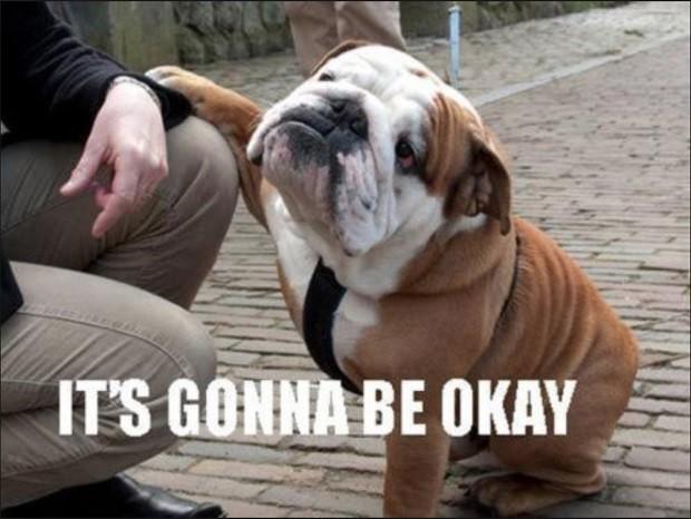 english bulldog meme okay