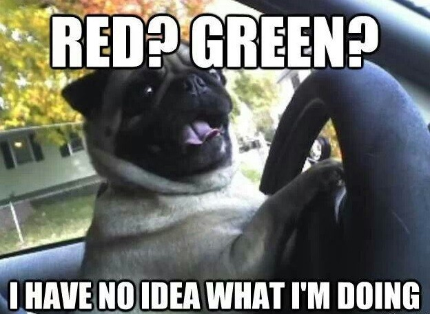 Funny Memes For No : Hilarious pug memes will make your day