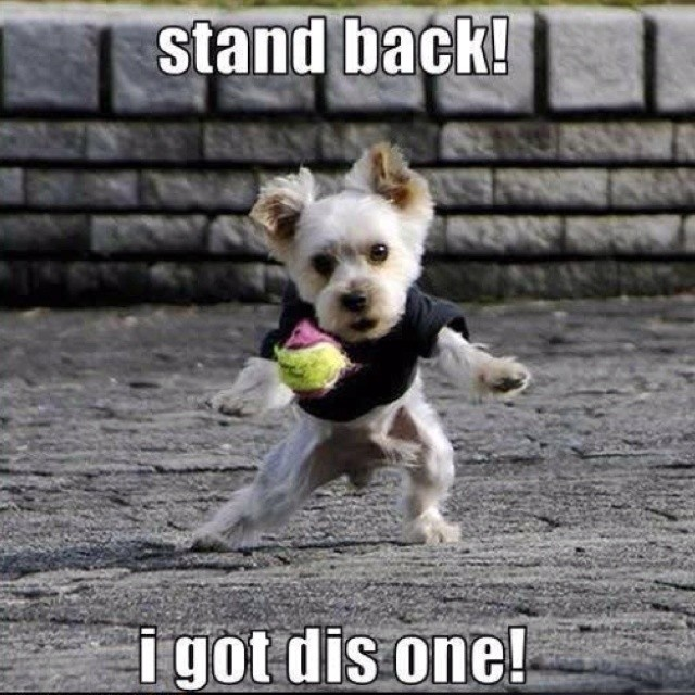 jack russell got ball meme 12 hilarious jack russell memes will make your day