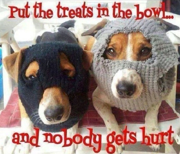 treats jack russells meme 12 hilarious jack russell memes will make your day