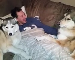 This jealous Husky will absolutely bring a smile and make your day!