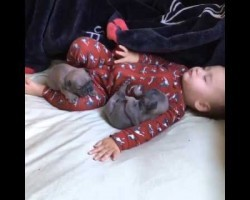 Too Cute! Adorable Pug puppies and baby snoozing together!
