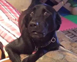 16 dogs who had no idea you'd be home so early