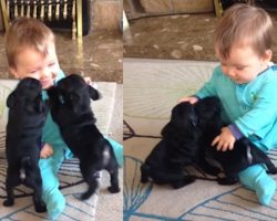 Warning: cuteness overdose! Baby boy playing with Pug Puppies!