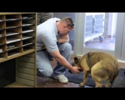Man's Emotional Reunion With His Dog Lost For Seven Months Will Warm Your Heart