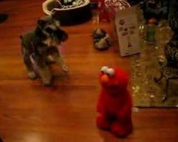 Dog Meets Tickle Me Elmo For The Very First Time