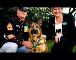 Heroic US Marine Corps Service Dog Awarded Top Medal For War Animals