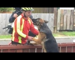 Postal Worker Caught Bonding With German Shepherd While Delivering Mail