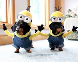 These Wiener Dog Minions Will Make Your Day!