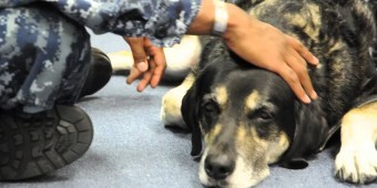 Black Labrador Enters A Room Full Of Servicemen… Now Watch What He Does, WOW!