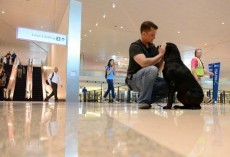 Soldier Reunited With Dog He Served With In Afghanistan. Amazing!