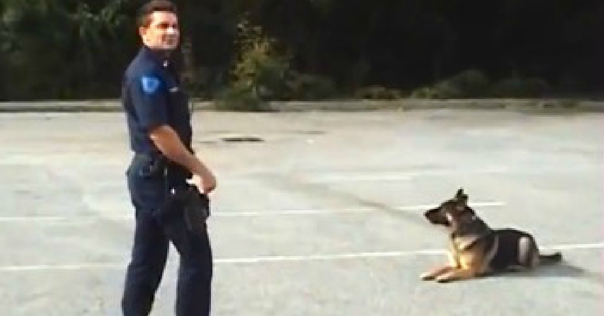 Nos amis les animaux. - Page 38 Smartest-Police-Dog-Ever