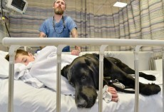 Labrador Refuses To Leave His Best Friend With Autism Alone In Hospital