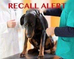 URGENT: Dog/Cat Food Recalled Due To Salmonella