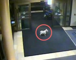 Dog Sniffs Her Way Into Hospital To Find Owner