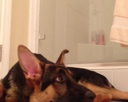 He was singing in the shower. What his German Shepherd did in response is HILARIOUS!