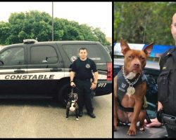 Local Cops Opt For Rescued Pit Bulls Rather Than Purebreds To Be On The Police Force
