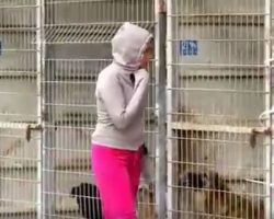 Woman Can't Decide Which Dogs To Save… So She Buys The Entire Shelter