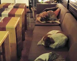 This Coffee Shop Opens Its Warm Doors So Freezing Stray Dogs Have Safe Place To Sleep