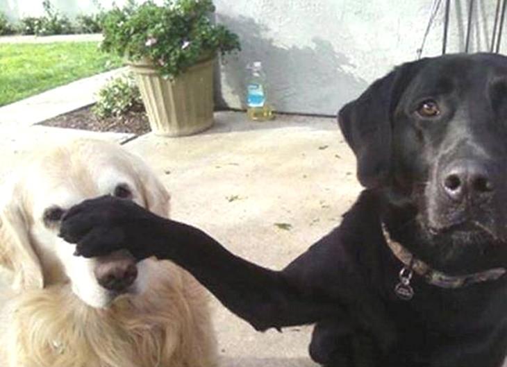 dog-talking-rude