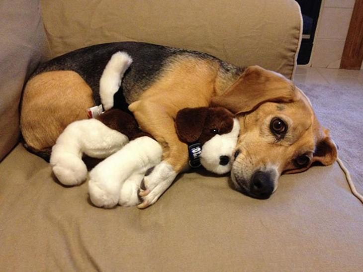 dogcuddlestoy