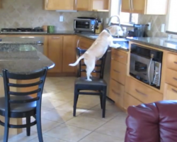 10 Naughty Beagles Caught in the Act
