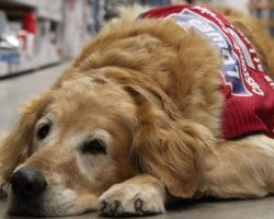 Veteran Can't Work Without His Service Dog So A Company Hired Them Both