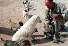 Marine Refuses To Leave Loyal Stray Dog Behind In Iraq