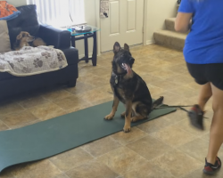 German Shepherd Puppy Makes The Best Workout Partner