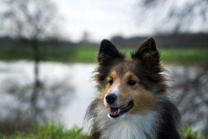 dog-1091422_960_720