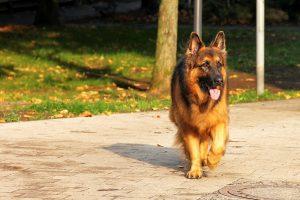 dog-1726931_1280