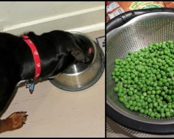 10 Healthiest 'People Foods' You Should Be Feeding Your Dog