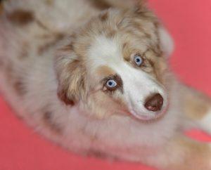 puppy-1391428_960_720