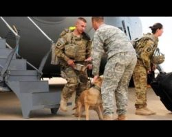 Army Soldier and His K-9 Companion Reunited After 4 Year Separation