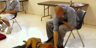 They Put A Dog Inside His Jail Cell And Started Filming. Now Watch What The Inmate Does…