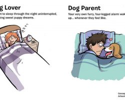 What It's Like To Be A Dog Lover vs. A Dog Parent