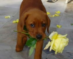 """10 times your dog said """"I love you"""" and you totally missed it"""