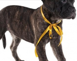 Do you know what a yellow ribbon tied on a dog's collar means? I had no idea…