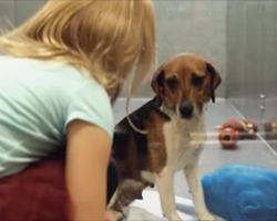 A Girl Crouches Next To A Dog In The Shelter To Say Hello, Then The Sweetest Thing Ever Happens