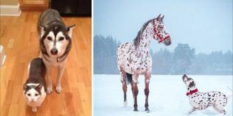 10+ Animal Pairs Who Look Like Siblings