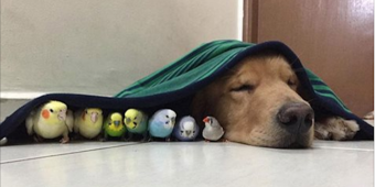 This is the friendliest dog in the world – he's best friends with 8 birds and a hamster