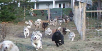 Man Adopts 45 Dogs And Builds A Four-Acre Enclosure For Them To Run Free In