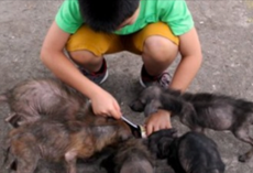 11-Year-Old Boy Works Miracles With His Very Own Animal Shelter