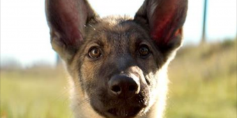 PETA Calls for 'A Dog's Purpose' Boycott Over Video Showing Alleged Abuse