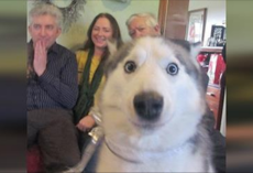 10+ Dogs Who Mastered The Art Of Photobombing