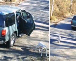 Pit Bull Abandoned On Camera Is All Wags When 30 Minutes Later Something Wonderful Happens