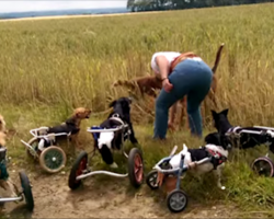 Dogs in wheelcart playing with a stick is the happiest thing you'll see today