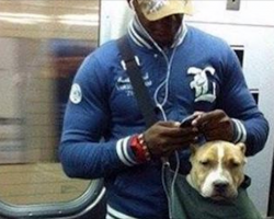 NYC Subway Bans Dogs Unless They Fit into a Bag. These Big Dog Owners Accepted the Challenge.